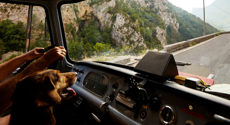 What Are The Trucking Companies That Allow Pets?