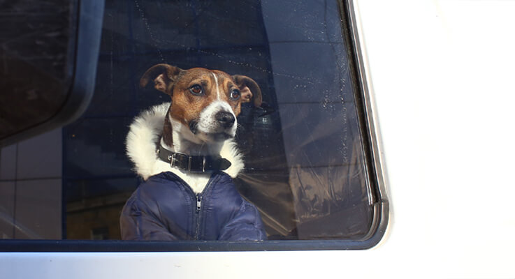 What Is The Best Dog For A Truck Driver?